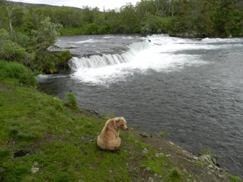 Bear sitting at rivers edge
