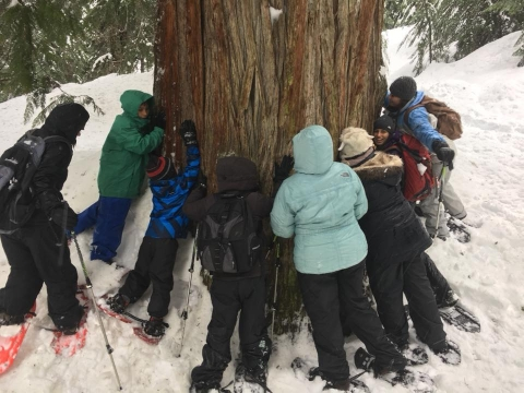 A group of people in snowshoes standing around and hugging a giant tree