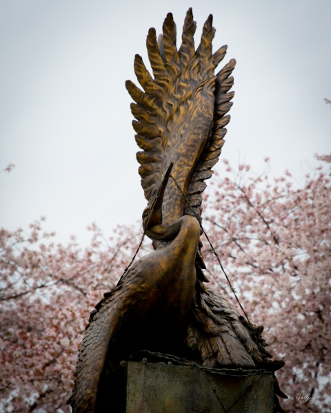 Crane sculpture with blossoming cherry blossom trees behind it