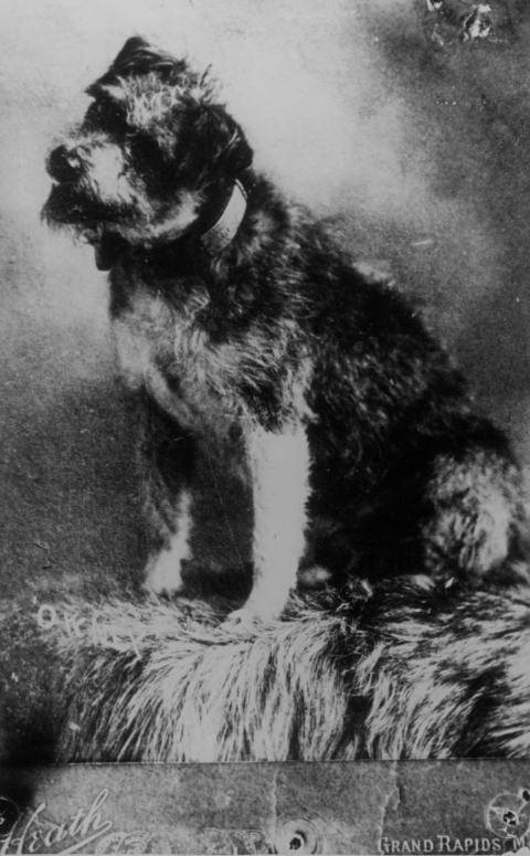 Vintage photograph of a scruffy dog tilting his head, smiling with his tongue out