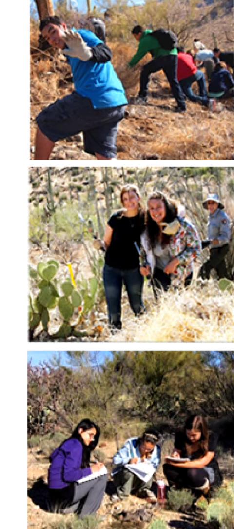 Three images of children learning in Saguaro National Park