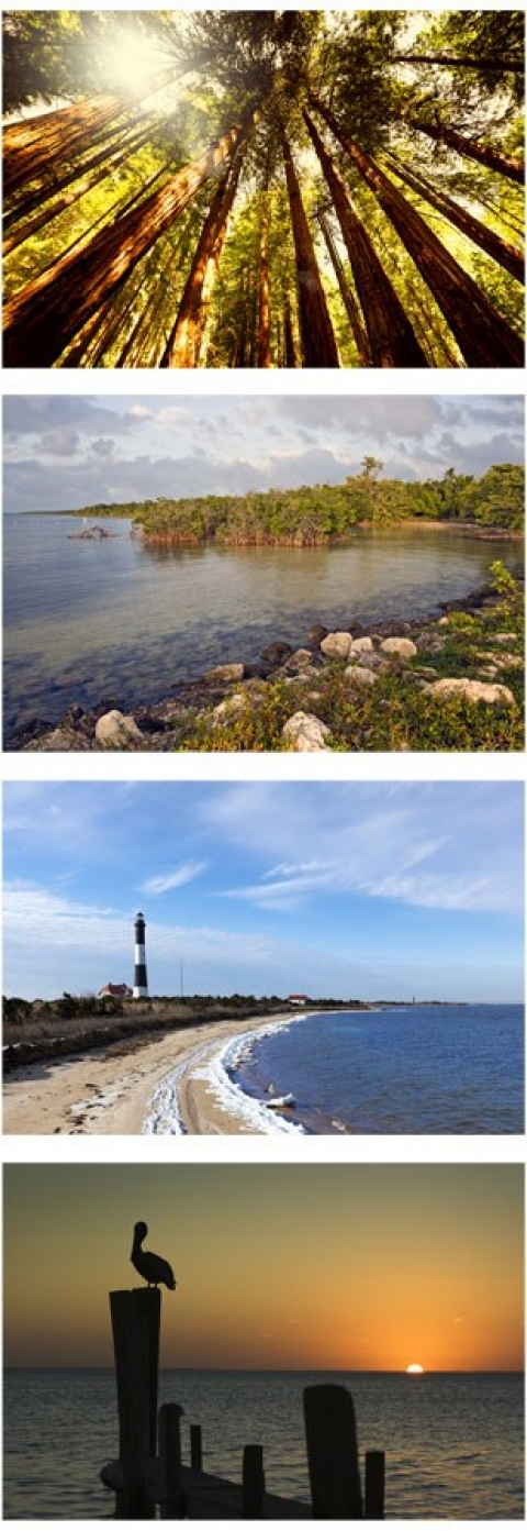 From top to bottom: Image of Muir woods, Fire Island Lakeshore, Lighthouse and coastline, Silhouette of Pelican at sunset on dock