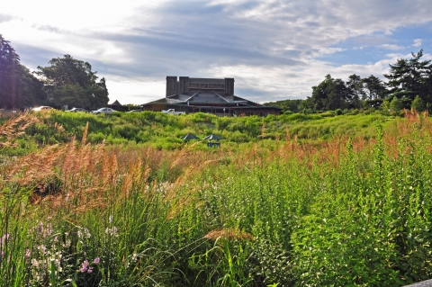 Tall grasses and shrubs in the native meadow with the Filene Center in the distance