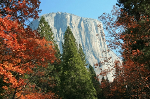 Fall foliage seen among the mountains at Yosemite
