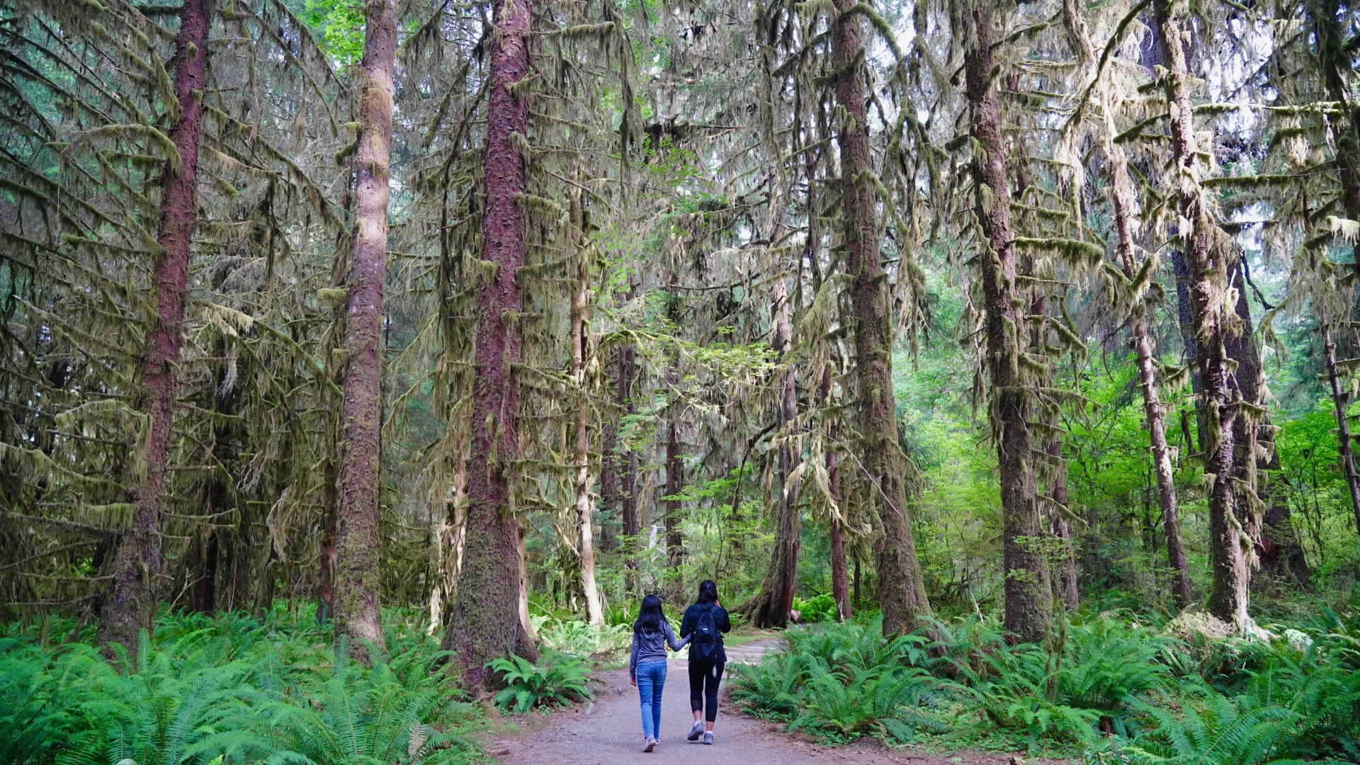 Two young people walk through the forest at Olympic National Park